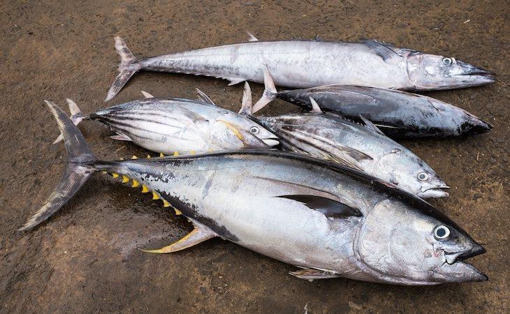 Se recomienda sustituirlo por atún blanco