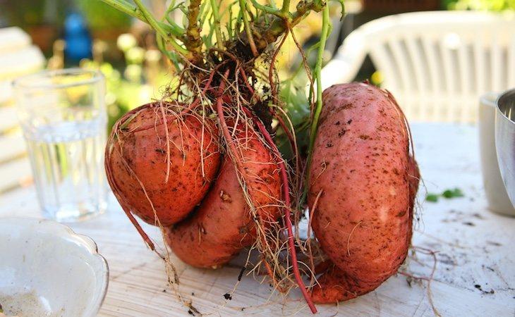 Algunos vegetales naranjas con niveles altos de antioxidantes son los boniatos o las zanahorias