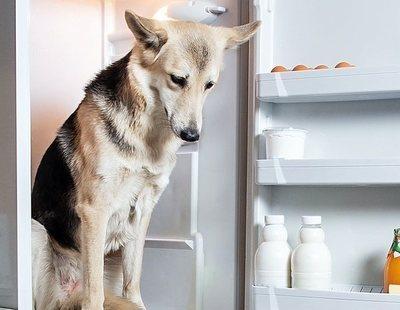 Un hombre descuartiza al perro de su expareja y le deja sus restos en la nevera