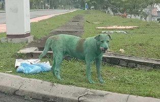 Maltrato animal: fotografía a un  perro pintado y en estado lamentable