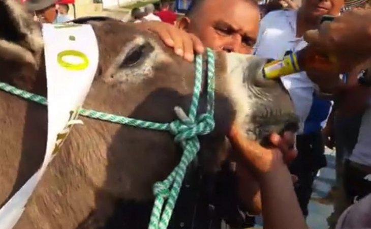El burro fue obligado a beber cerveza por la nariz