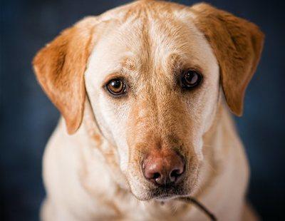 Una pareja se enfrenta a 14 años de cárcel por abusar sexualmente de su perra y grabarse