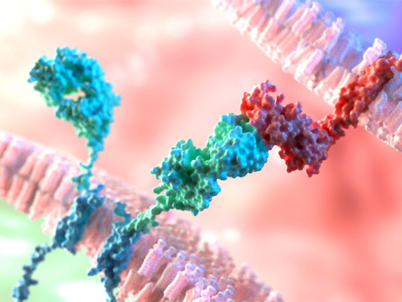 Científicos ingleses descubren una proteína capaz de curar todos los tipos de cáncer