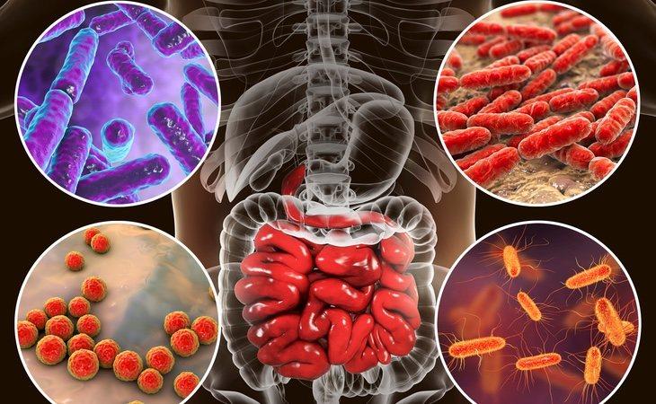 El microbioma, las bacterias que viven en nuestro organismo, pueden aportar muchos datos sobre nuestra salud y esperanza de vida