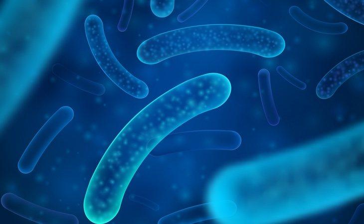 Las bacterias que habitan en nuestro cuerpo son más permables a nuestros hábitos de vida y factores ambientales