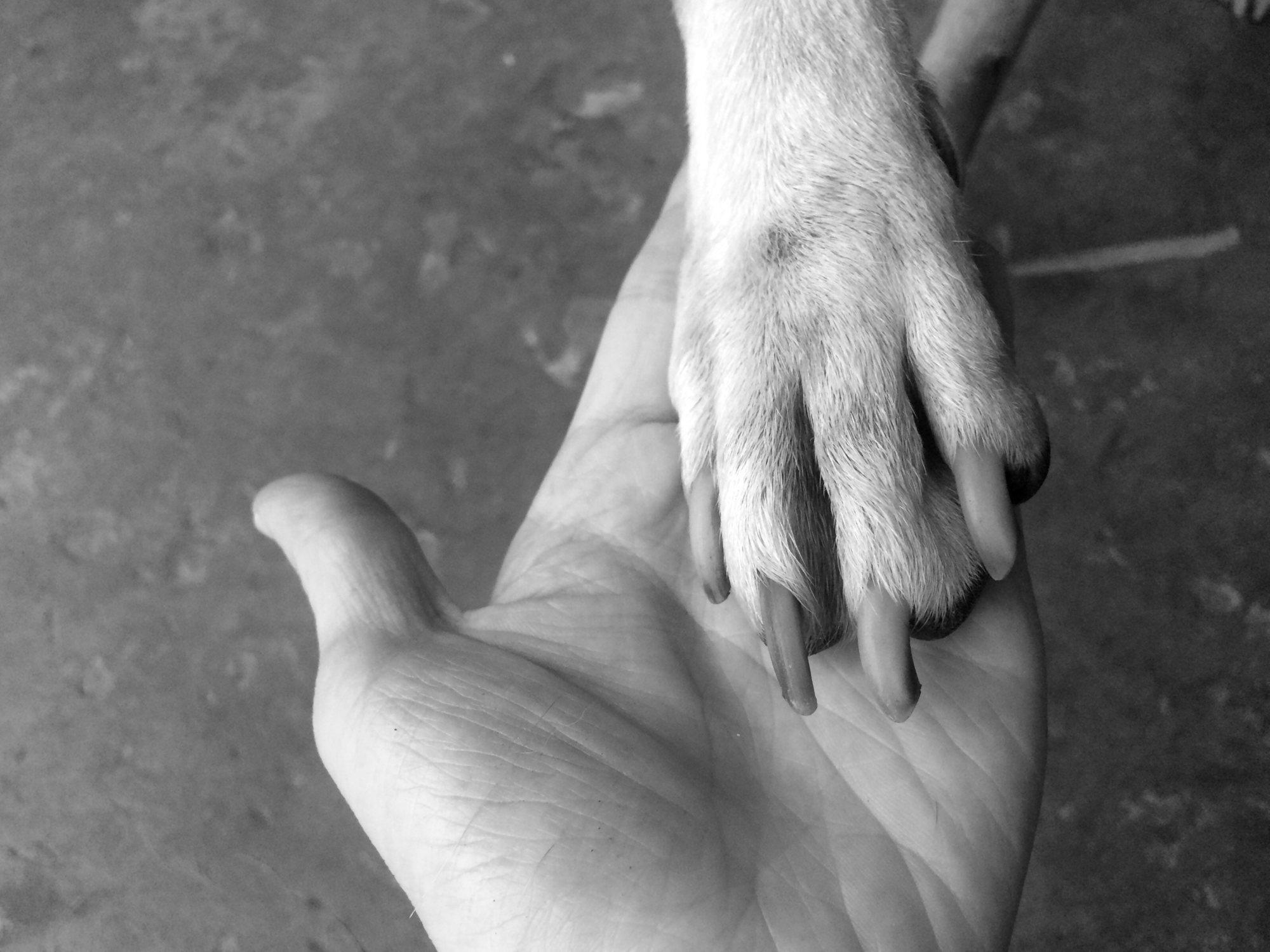 Detenido tras violar y asesinar a golpes a su perra de 8 meses