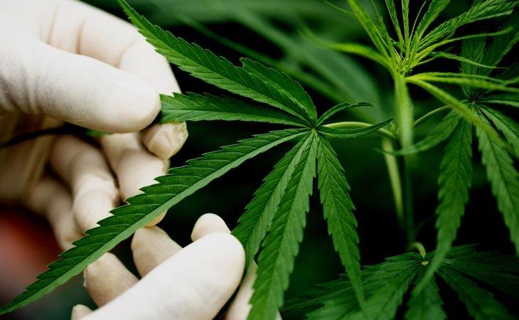 La creciente tolerancia social ante el cannabis está generando toda una industria alrededor de esta planta