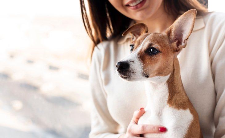 No hay ninguna prueba que demuestre que los animales de compañía puedan infectarse