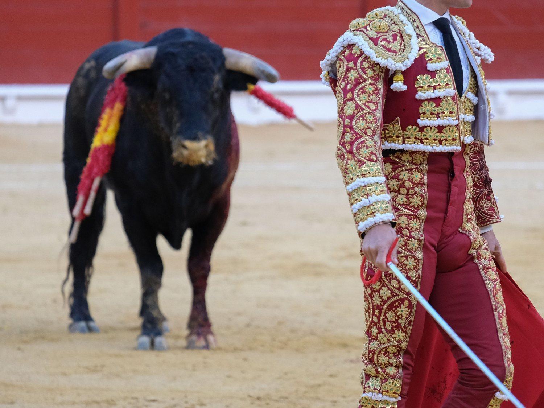 El final de los toros: así se ha gestionado la abolición de esta práctica en 8 países