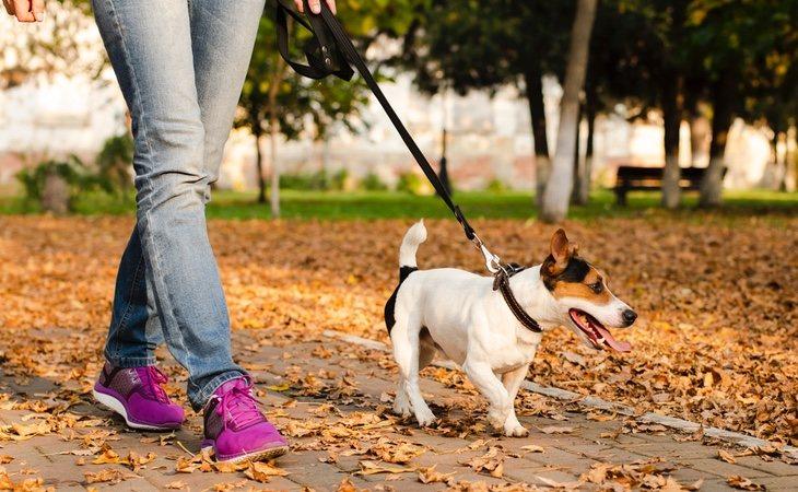 Los paseos a nuestras mascotas se permiten, aunque el Gobierno apela a la responsabilidad individual para acortarlos al máximo