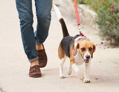 Se alquilan perros para pasear y burlar la cuarentena por el coronavirus