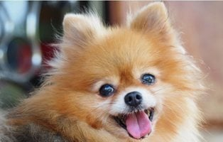 Muere el primer perro con Covid-19 después de que su dueña terminase la cuarentena