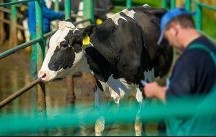 El consumo de carne y el sacrificio de animales en España se hunden por el coronavirus