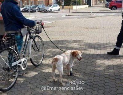 Multada en Sevilla por atar a su perro cojo al manillar de su bici para violar el confinamiento