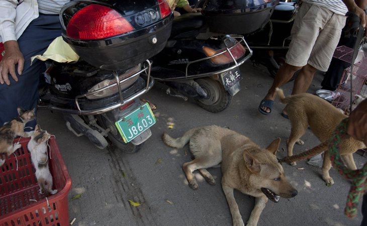 En regiones de China se venden perros y gatos en mecados para su consumo