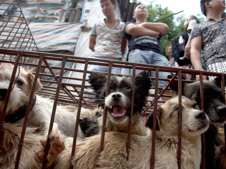 Ya no se podrá comer perros y gatos en China: dejan de ser considerados ganado