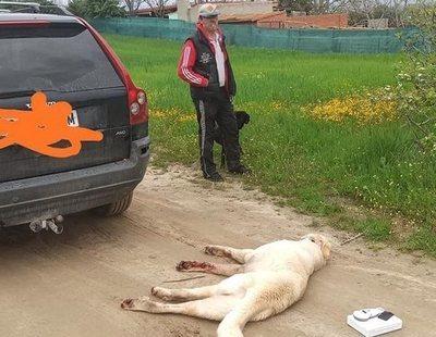 Se salta el confinamiento en Madrid y asesina a su perro con el coche ante su hijo de diez años