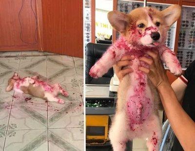 Una perra 'finge' su muerte sangrienta hasta que sus dueños descubren la verdad tras el engaño