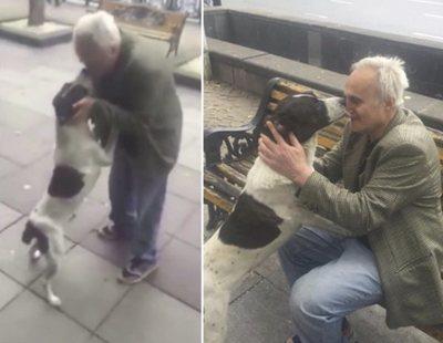 Busca a su perro desesperadamente 3 años, hasta que recibe una llamada oculta con el paradero
