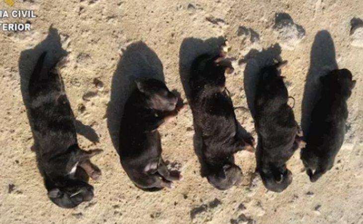 Los cinco cachorros asesinados en una imagen difundida por la Guardia Civil