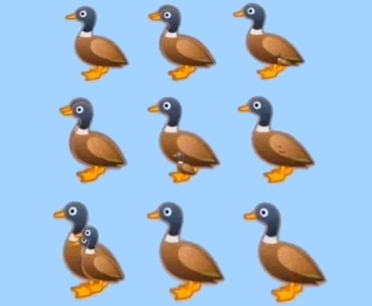 ¿Cuántos patos aprecias en esta imagen?