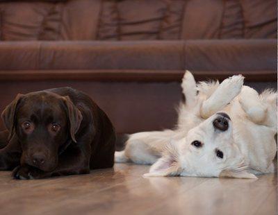 61.000 euros al año por cuidar una casa y dos perros: así puedes apuntarte a esta oferta de empleo
