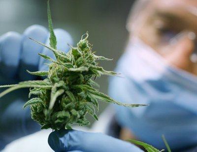 El cannabis podría ayudar en el tratamiento y prevención del coronavirus