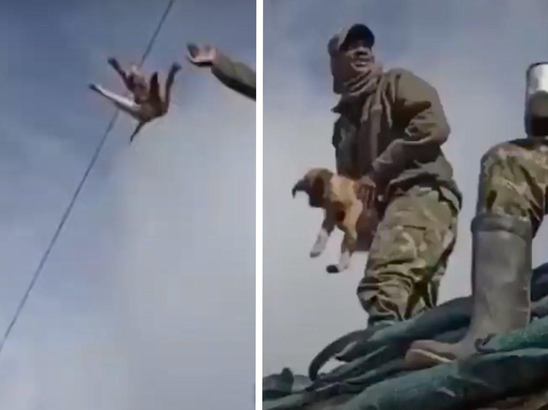 Un militar se graba lanzando un perro al vacío y riéndose cuando muere al golpearse