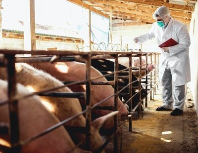 """Inquietud entre epidemiólogos por la nueva gripe porcina de China: """"Hemos visto contagios a humanos"""""""