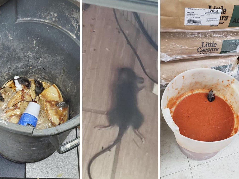 Un empleado de una conocida pizzería difunde fotos de ratas caminando por toda la comida