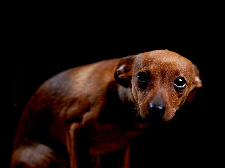 Una joven echa tabasco en los ojos y hocico de su perro y graba cómo se retuerce