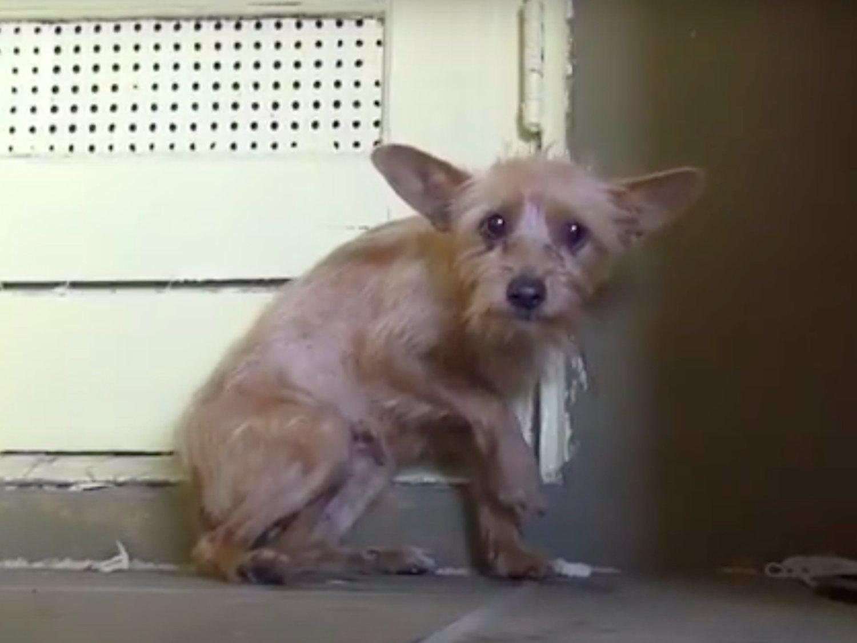 La emotiva reacción de un perro callejero al sentir caricias por primera vez en su vida