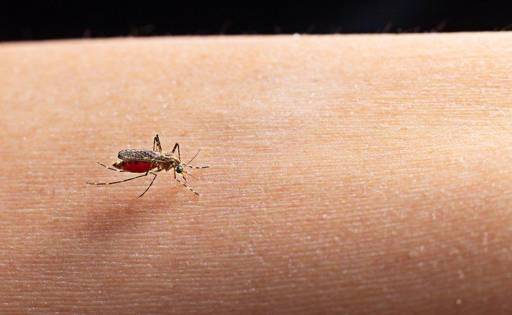 La enfermedad se transmite, principalmente, por la picadura de insectos