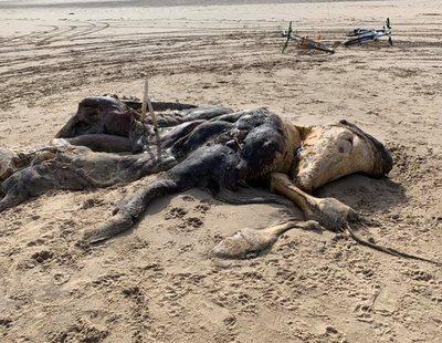 El extraño cadáver encontrado en las playas de Inglaterra que levanta todo tipo de teorías