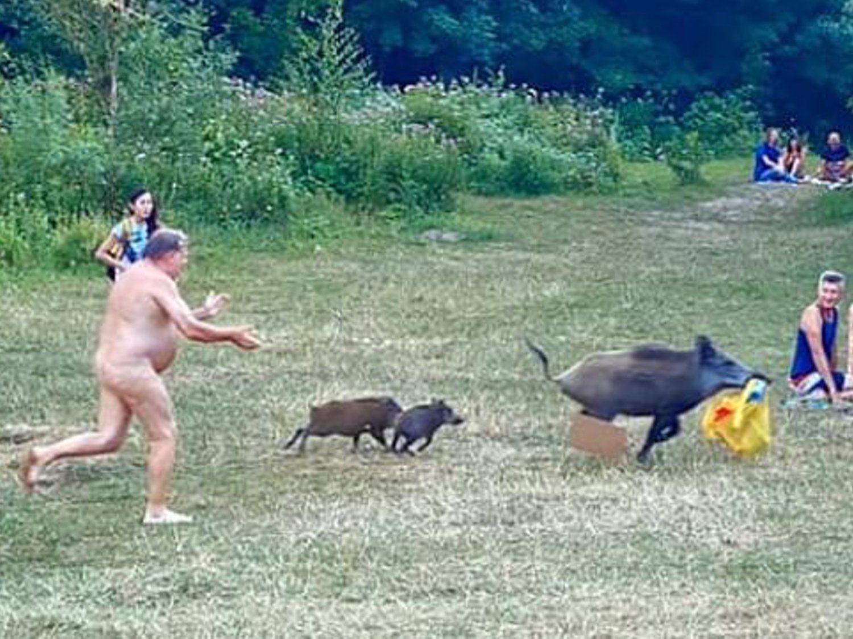 Captan el momento en que un nudista alemán persigue a un jabalí que le robó el portátil