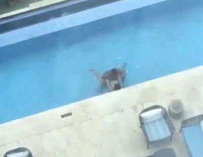 Graban a una pareja teniendo sexo en la piscina de un hotel a plena luz del día