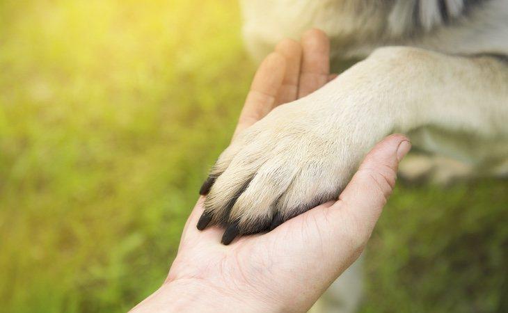 Saber interpretar los gestos de nuestro perro es fundamental para conocer también cómo se siente
