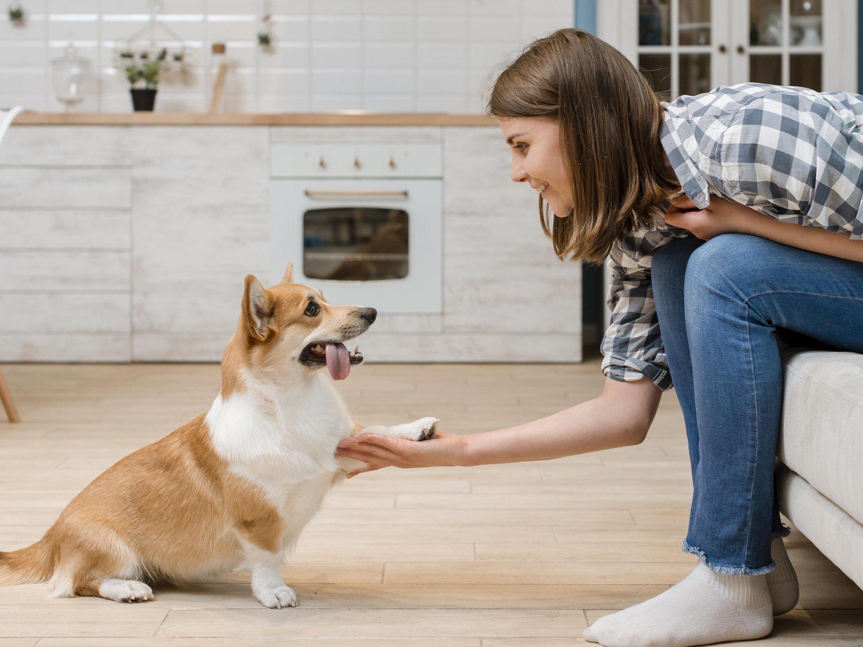 Todos los mensajes que intenta transmitirte tu perro, según cómo te está dando con su pata