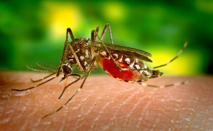 El dengue se transmite por mosquitos y en Italia ya hay un brote