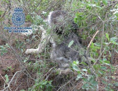 Tres detenidos en La Rioja por golpear y fracturar el cráneo de un perro de un año hasta la muerte