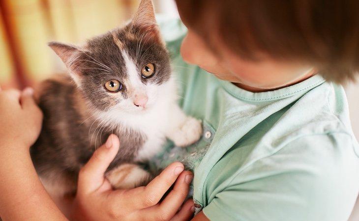 El desarrollo de los felinos no es igual que el de los seres humanos