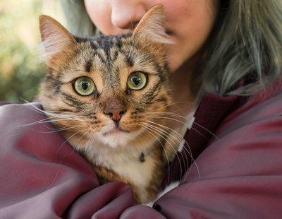 ¿Cuál es la edad real de mi gato en años humanos? Esta es la fórmula definitiva