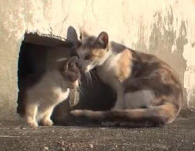 Amor incondicional de una gata a su cría discapacitada: el vídeo viral más enternecedor