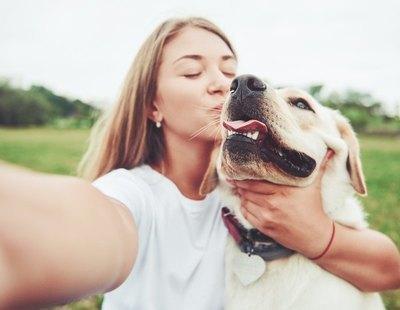 Así aconsejan los veterinarios desinfectar a los perros tras el paseo para evitar el coronavirus