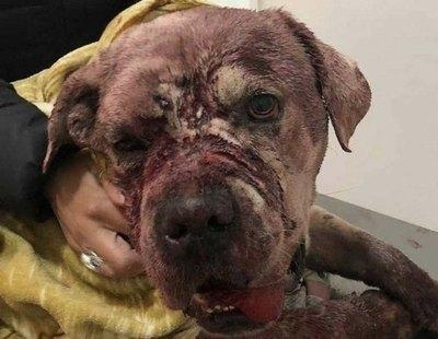 Denunciado tras golpear, castrar, mutilar, apuñalar y hundir el cráneo de un perro