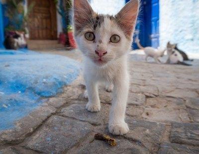 La Policía busca a los responsables de mutilar y quemar vivos a gatos callejeros en Murcia