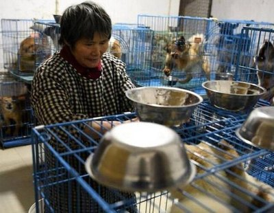 Weng Junhong, la jubilada china que vive con más de 1.300 perros callejeros en su casa