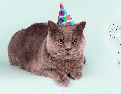 Organiza una fiesta para celebrar el cumpleaños de su gato y termina con un brote de 15 contagios