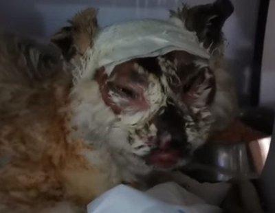 Queman vivo a un gato con un soplete en Jaén: se busca a los responsables