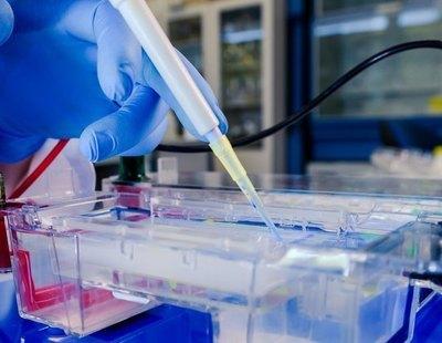 """La OMS ve """"poco creíble"""" que el coronavirus se escapó de un laboratorio en su visita a Wuhan"""